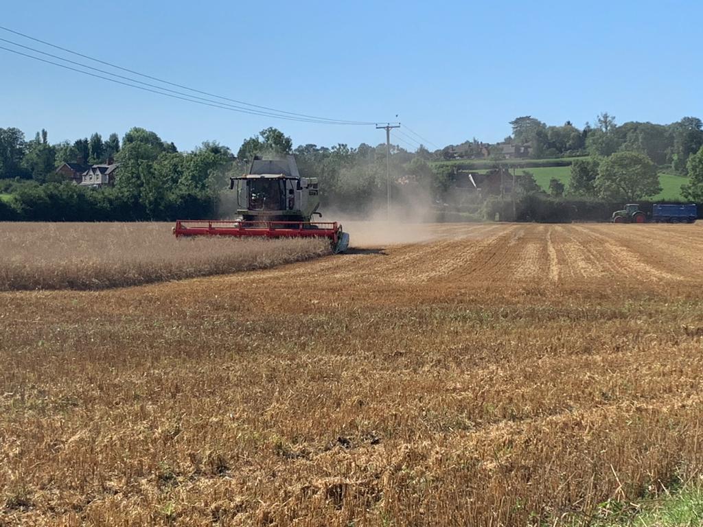 Harvesting 2020 - 2