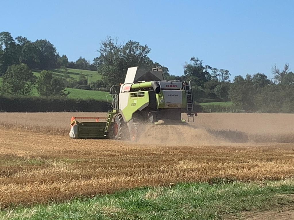 Harvesting 2020 - 3
