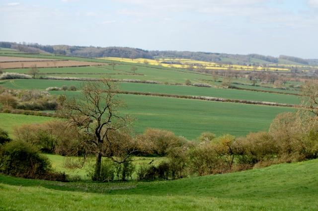 Yellow Fields - April 2016